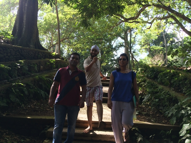 Monkeys fooling around in Monkey Forest