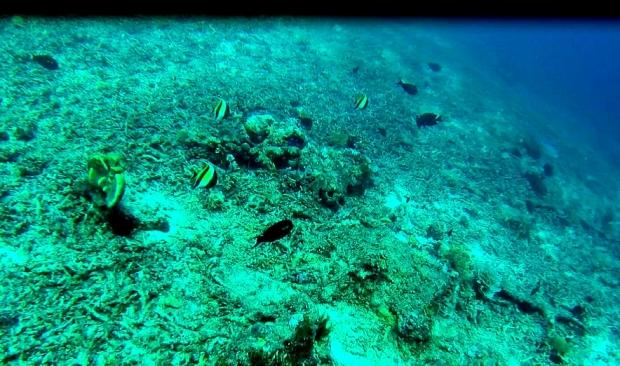 Fish(1)_Fotor