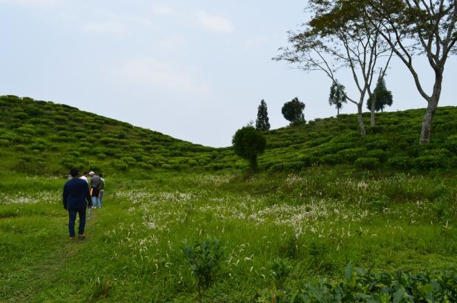 Takdah tea estate_Fotor
